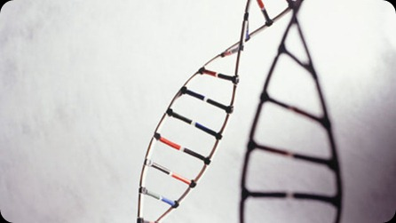 genoma-humano_TINIMA20120905_0350_5