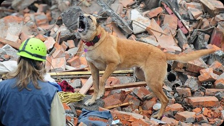 perro-terremoto--644x362