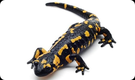 salamandra-colores--644x382